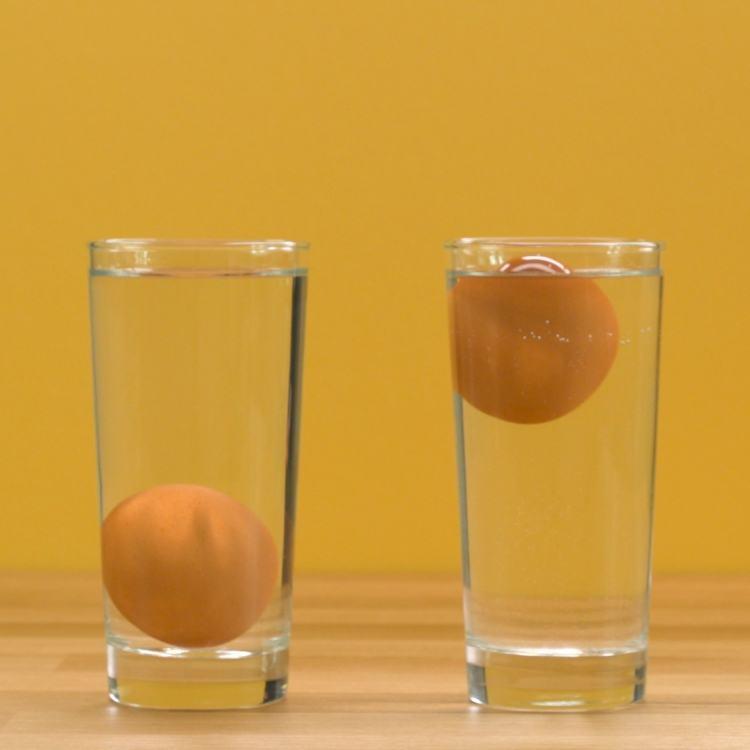 Egg-Test-1