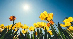 Tavasszal is fenyeget ez a veszély!
