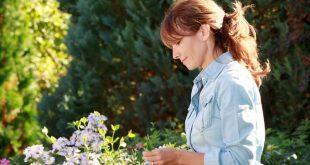 Nyári kertészkedési útmutató